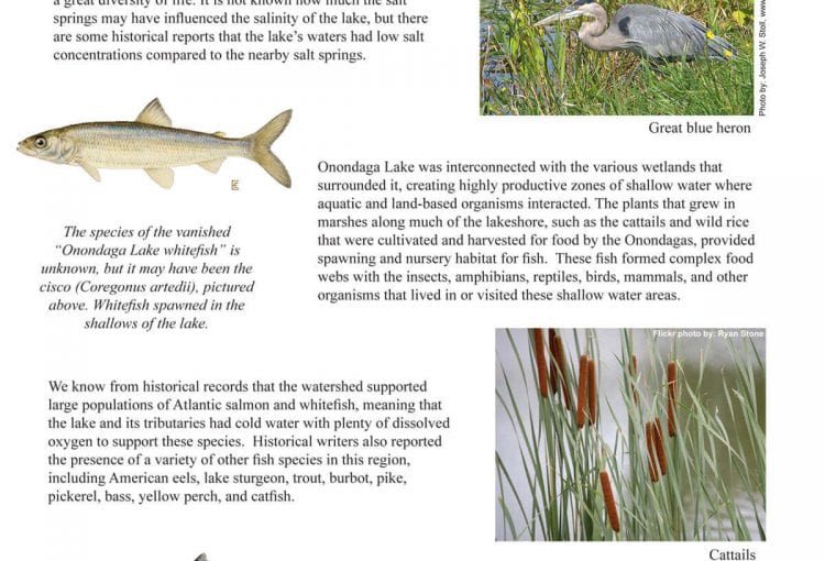 Historic Fisheries of the Watershed Fact Sheet
